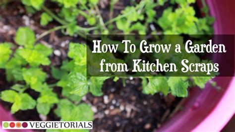 how to grow a garden how to grow a vegetable garden from kitchen scraps youtube