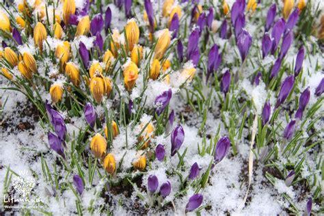 Pavasaris | We love Lithuania