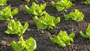 Garten Planen Online : gem segarten anlegen so planen sie einen gem segarten ~ Lizthompson.info Haus und Dekorationen