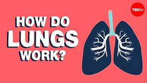 How Do The Lungs Work  - Emma Bryce