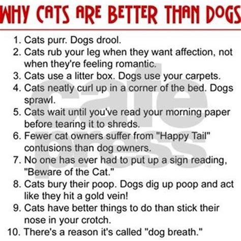 cats are better than dogs cats are better than dogs rectangle decal by cafepets