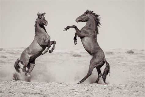 wild horses curyl myshopify kimerlee fine divide