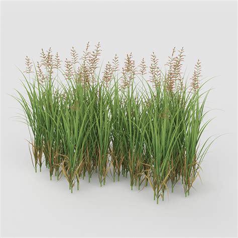 grass bush grass bush by arcelement 3docean