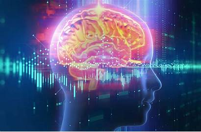 Neuroscience Study Brain Psypost Conflict Emotional Response