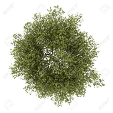 142 best images about vegetation cutout on pinterest 3d