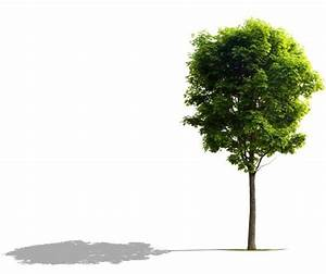 Shade-tree-sized-for-form
