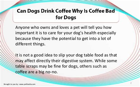 Coffee consumption can trigger a wide array of extremely serious consequences in canines. Can Dogs Drink Coffee? Why Is Coffee Bad for Dogs