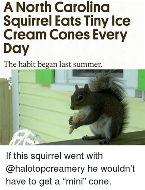 North Carolina Meme - a north carolina squirrel eats tiny lce cream cones every day the habit began last summer if