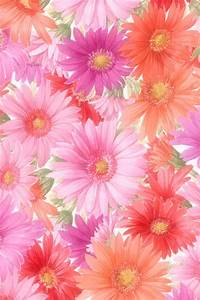 Cute Cool Flower Android Wallpaper Free Download for Mobile