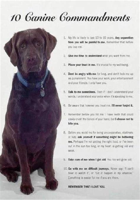 inspirational quotes  dog rescue quotesgram