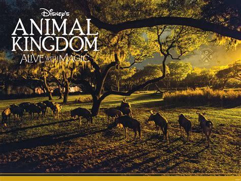 Disney Animal Kingdom Wallpaper - our disney s animal kingdom nighttime inspired