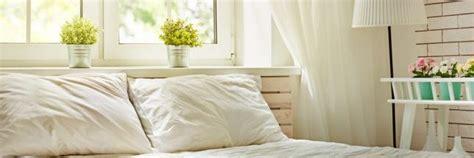 plante verte pour chambre idée reçue il ne faut pas mettre de plante dans sa chambre