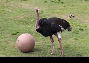 Largest Biggest Bird in the World
