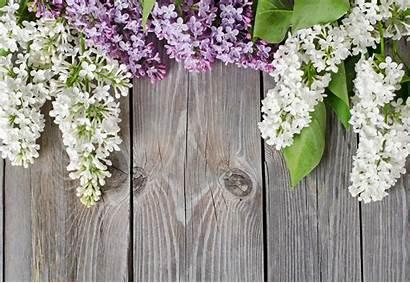 Lilac Wood Flowers Board Lilla Wallpapers Desktop