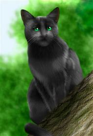 Warrior Cats Crowfeather And Hollyleaf