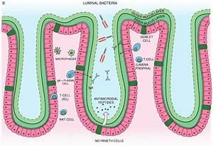 A  Small Intestine Mucosal Immune System Landscape  The Intestinal