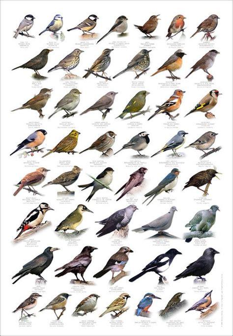 17 best images about birds on pinterest bird