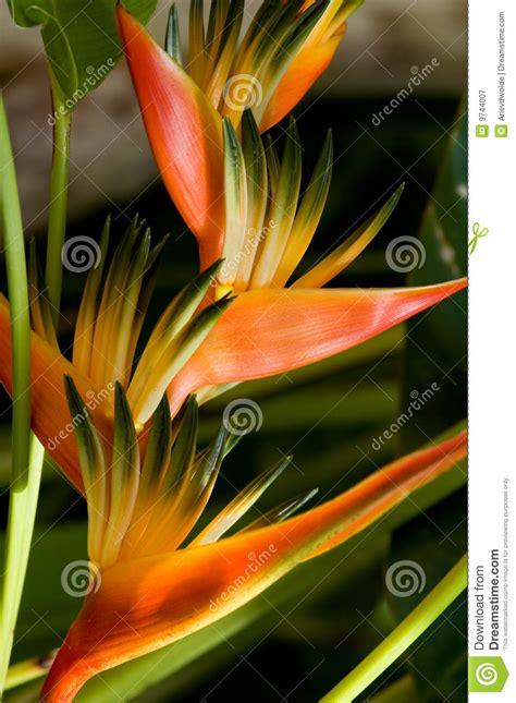 tropische blumen stockbild bild von rein auszug frische