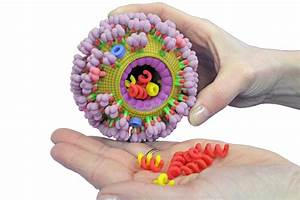Influenza Virus Capsule