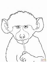 Coloring Baboon Animals Supercoloring Springbok Coloringtop 27kb 2000px 1500 sketch template