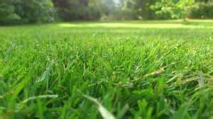 Rasen Düngen Regen by Rasen Nach Dem D 252 Ngen Bew 228 Ssern Rasenduenger De