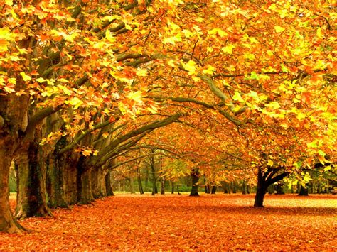Autumn Nature Wallpapers Hd Pictures  One Hd Wallpaper