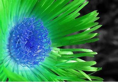 Flower Trippy Colorful Flowers Gifs Changing Rainbow