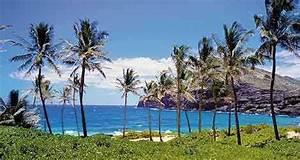 College Tennis Teams - Hawaii Pacific University - Team Home