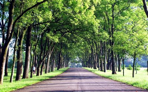 hd green trees roads taiwan background images wallpaper