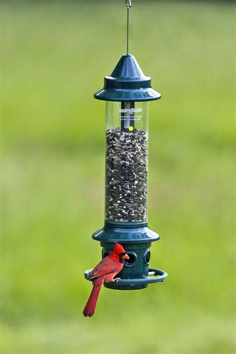 Brome 1024 Squirrel Buster Plus Wild Bird Feeder Review ...