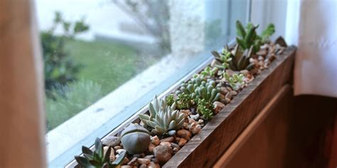 indoor flower boxes   convince   bring