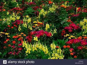 Blumenarten Az Mit Bild : bunter blumengarten mit verschiedenen blumen gemischte arten blumengarten buntgemischt mit ~ Whattoseeinmadrid.com Haus und Dekorationen