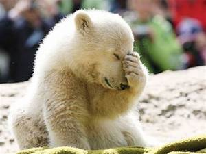 baby-polar-bear-thinking-600×450 Death and Taxes