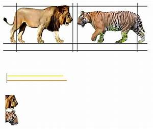 Lion and tiger size comparisons (accuracy) - Animal Untamed