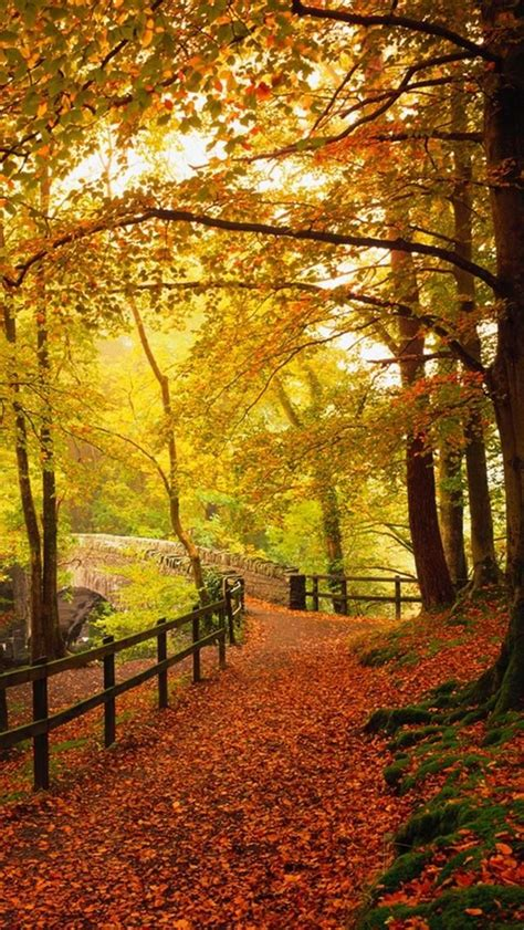 Gold Autumn Wallpapers by Gold Autumn Beautiful Fall Colors Randoms Fall