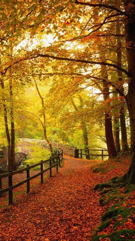 Beautiful Autumn Wallpapers Iphone by Gold Autumn Beautiful Fall Colors Randoms Fall