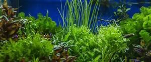 Pflanzen Für Aquarium : aquarium pflanzen welche ausw hlen ~ Buech-reservation.com Haus und Dekorationen