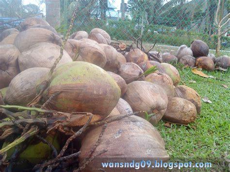 bermanja dengan kelapa pada hujung minggu wan sandx