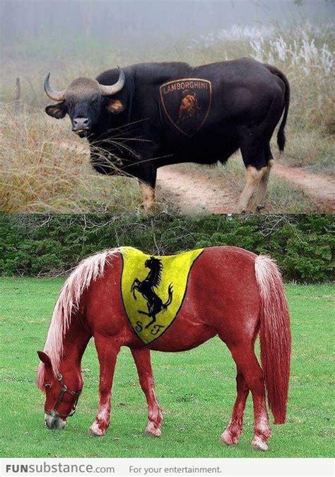ferrari horse vs mustang horse lamborghini bull and ferrari horse funsubstance