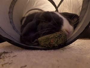 Haustiere Für Die Wohnung : kaninchenstall selber bauen bauanleitung f r die wohnung tiere ~ Frokenaadalensverden.com Haus und Dekorationen