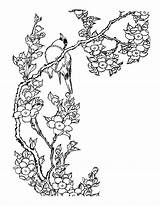 Blossom Cherry Coloring Tree Pages Getcolorings Printable sketch template