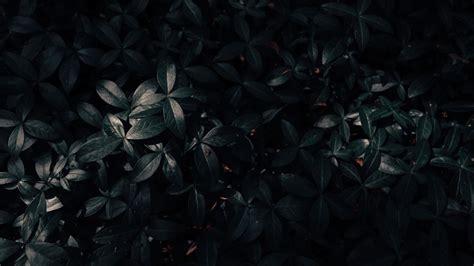 black green leaves hd black aesthetic wallpapers hd