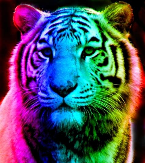 Rainbow Animal Wallpaper - cool tomboy wallpaper wallpapersafari