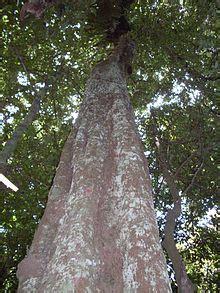 list  tree genera wikipedia