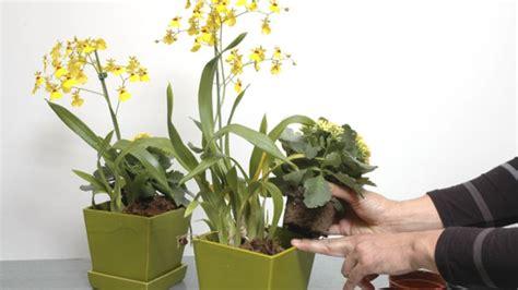 orquideas de flor amarilla hogarmania