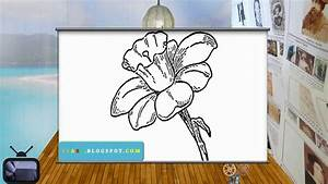 How To Draw Daffodils - Easy Daffodil Drawing