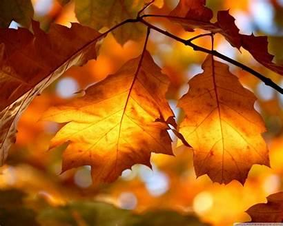 Foliage Autumn