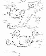 Duck Coloring Ducks Pages Farm Animal Colouring Printable Pond Animals Swimming Sheets Print Schwimmen Enten Bauernhof Activity Drawing Baby Adult sketch template