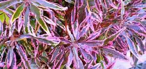 Plantes D Hiver Extérieur Balcon : plante exterieur hiver pivoine etc ~ Nature-et-papiers.com Idées de Décoration
