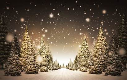 Christmas Trees Amazing Wallpapers Holiday Tree Backgrounds